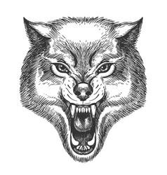 hand drawn wolf head vector image