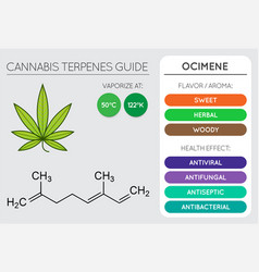 cannabis terpene guide information chart aroma vector image