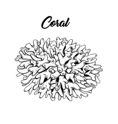 Coral freehand black ink vector