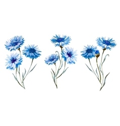 Cornflower watercolor set vector