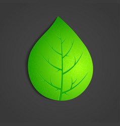Green leaf on dark background vector
