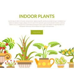 indoor plants banner landing page template vector image