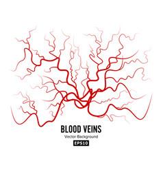 human blood veins red blood vessels design vector image