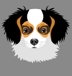 puppy isolated on grey background vector image