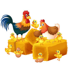 chicken family on white background vector image