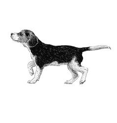 Dog 02 vector