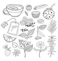 Tea hand drawn isolated collection herbal plants vector