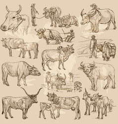 Cattle animals - an hand drawn pack collection vector