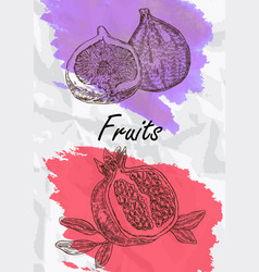 Fig and pomegranate fruits vector