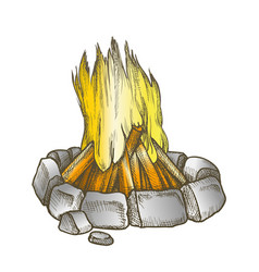 traditional burning campfire color vector image
