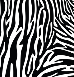 abstract skin texture of zebra vector image vector image