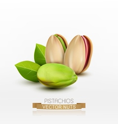pistachios peeled or in shell isolated vector image