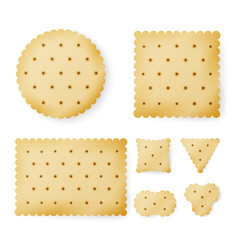 cracker in different shapes yellow cookie vector image