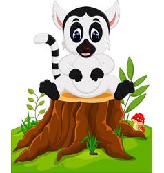 cute baby lemur sitting on tree stump vector image
