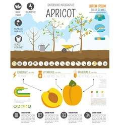 Gardening work farming infographic Apricot Graphic vector