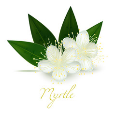 myrtle flowers and leaves in realistic style vector image