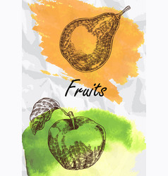 pear and apple fruits vector image