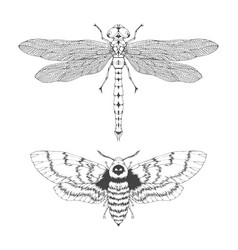 set hand drawn flying insects different vector image