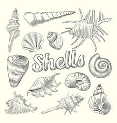 seashells hand drawn aquatic doodle marine vector image vector image