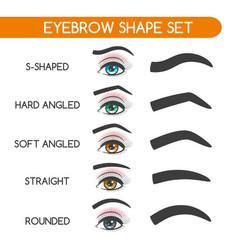 women eyebrows shapes set vector image vector image