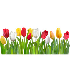 colorful tulips pattern vector image