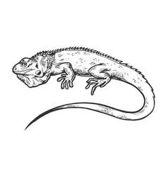 Iguana animal engraving vector