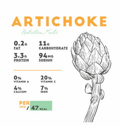Nutrition facts of artichoke hand draw sketch vector