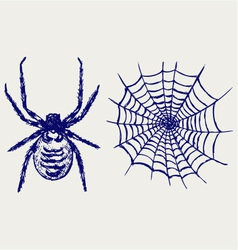 Spider and cobweb vector image
