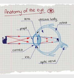 Anatomy of the Eye vector