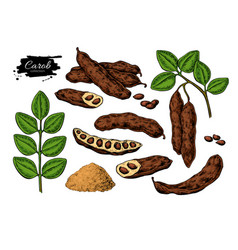 Carob superfood drawing set isolated hand vector