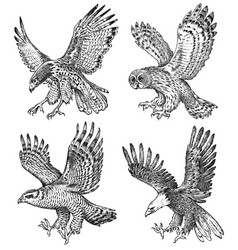 set realistic birds goshawk pallid harrier vector image