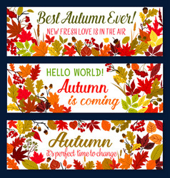 autumn season welcoming banner with fallen leaf vector image