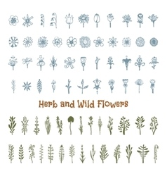 flowers and herbs drawn hand pencil it can be vector image
