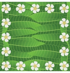 Ornament Of Frangipani Flowers And Leaves vector image vector image