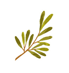 Tree branch with long green leaves hand-drawn vector