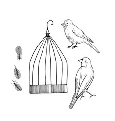 Canary and cage sketch vector