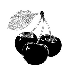hand drawn sketch cherry in black isolated on vector image