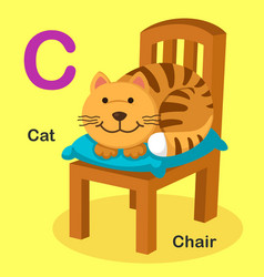 isolated animal alphabet letter c-cat chair vector image