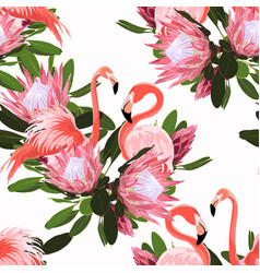 pink flamingo and exotic protea flowers vector image