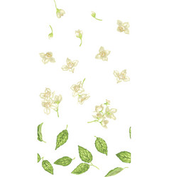 Seamless pattern with jasmine plant parts like vector