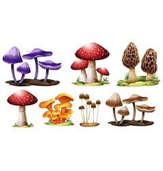Different types of mushrooms vector
