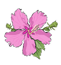 pink flower with buds realistic view with ink vector image vector image
