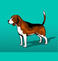 dog beagle pop art style vector image