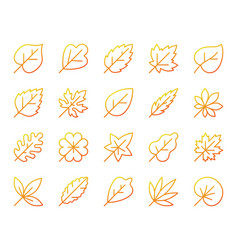 Organic leaf simple color line icons set vector