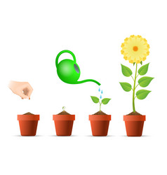 Plant growing stages in pot vector