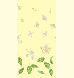 seamless pattern with jasmine plant parts like vector image