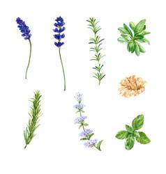 Set various isolated watercolor herbal tea vector