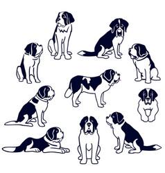 St bernard dogs vector