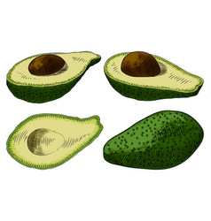 useful vegetables avocado on a white background vector image