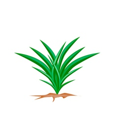 A Fresh Pandan Plant on White Background vector image